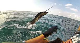 Image result for fishing marlin in thailand