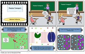 3 Types Of Passive Transport Passive Transport Storyboard By Medhasri12