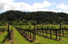 Image result for vineyard images free