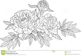realistic graphic three peony flower tattoo stock vector ilration of decorative decoration
