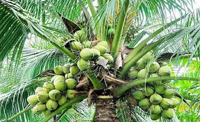 vastu for plants trees vastu shastra tips for plants coconut tree