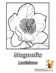 Small Picture Flower Coloring Pictures free to print Hawaii Louisiana states
