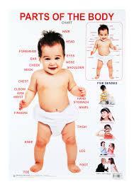 Human Body Parts Chart In English 22 True To Life Hindi Body Parts Chart