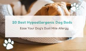 20 best hypoallergenic dog beds ease