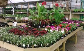 bedding plants riverside garden centre bristol