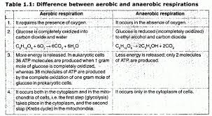 stpm biology experiment 7 effect of diffe nutrients on the anaerobic respiration of yeast the word equation