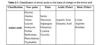 biology essay on proteins organic compounds biology classification of amino acids