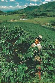 Enjoy all that south africa has to offer with one of our farms for sale across the country. Coffee Production Plant Genus Britannica