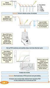 Flow Chart For Real Time Pcr Or Quantitative Pcr Molecular
