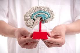 k inside your own brain the rise of diy neuroscience