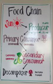 Science Related Chart This Is A Great Food Chain Anchor Chart That Could Easily