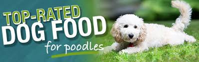 Toy Poodle Feeding Chart Best Dog Food For A Poodle Buying Guide Recommendations