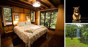 The Canopy Rainforest Treehouses  Tarlazi  Cairns Highlands The Canopy Treehouses