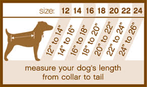 28 All Inclusive Sizing Chart For Dogs
