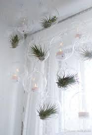 hanging glass planters air plants orb terrarium indoor plants household decoration green gifts garden succulent wedding decor garden planters glass orb