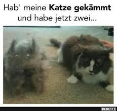 Lustige Sprüche Katzen Katzensprüche 2019 05 16