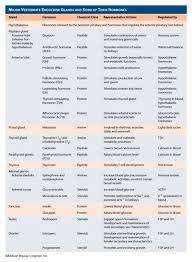 Endocrine System Hormones Chart Google Search Endocrine