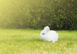 ᐈ cute baby bunnies stock photos