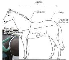 Girth Size Chart Horse Feed Calculator
