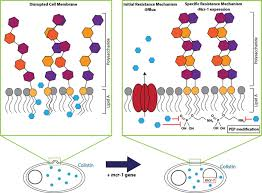 antimicrobial resistance in healthcare agriculture and the figure