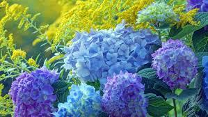 7 fast growing shrubs arbor day blog