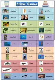 Animal Classification Chart Animal Classification Chart With Photos Animal