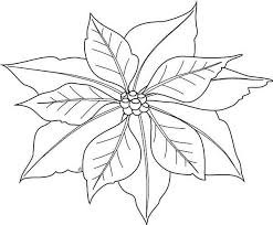 In mexico, they also have the name 'flores de noche buena' which. Poinsettia Poinsettia Image Coloring Page Poinsettia Image Coloring Pagefull Size Image Flower Coloring Pages Coloring Pages For Kids Christmas Tree Sketch