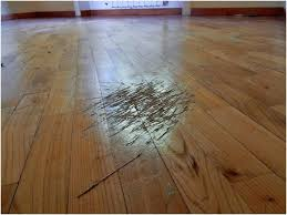 bright modern interior design with hard wood flooring get scratches out