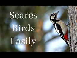 the best deter to scare birds away