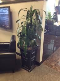 office greenery. Office Greenery. Plants And Greenery S W