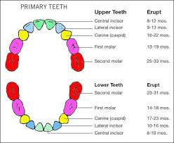 Teething Chart Babies Baby Teething Tips Born Gifted