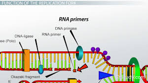 Dna Replication Definition Dna Replication Process Barca Fontanacountryinn Com