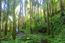 htbg hilo hawaii hamakua coast onomea scenic drive hawaii tropical botanical