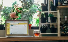 indoor home office plants royalty. Computer Work Table Tree Plant Wood Technology Wine House Window Glass Home Decoration Office Drink Business Indoor Plants Royalty