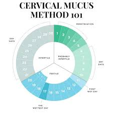 Life Of An Earth Muffin Birth Control What Is The Cervical