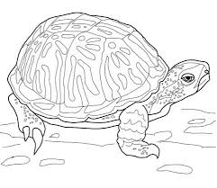 Small Picture Ornate Box Turtle coloring page Free Printable Coloring Pages