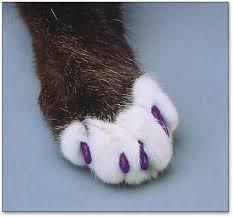 cat plastic claw tips macj br