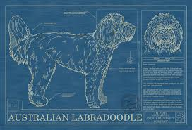 Small Picture Australian Labradoodle Animal Blueprint Company