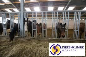Dierenkliniek Wolvega Welk Hooi Voor Mijn Paard Hoefslag