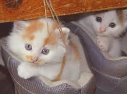 petco cats for sale.  Cats Petco Adoption Event Inside Cats For Sale S