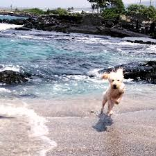 how to plan safe pet travel to hawaii