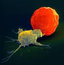 ナチュラル キラー 細胞