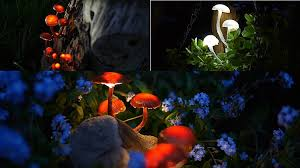 amazing garden lighting flower. DIY Garden Lighting | Make Amazing Glowing Mushrooms Flower