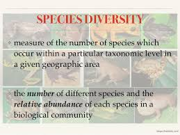 Species Diversity Definition Biodiversity Definition Levels And Threats