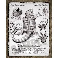 Leopard Gecko Morph Chart Pogona Vitticeps Print By Emily Burke