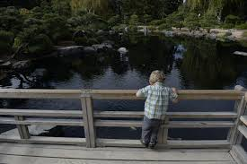 augustine winber 3 gets a look at the koi fish in the lake at the japanese garden from the moon view deck at the denver botanic gardens in 2016