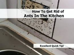 Ants In Kitchen Cabinets Awesome Inspiration Design