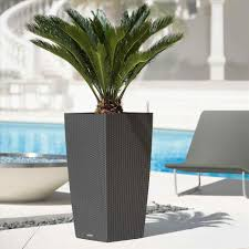 tall office plants. pinterest plant modern tall indoor plants stand green decorations office ultimate guide to large