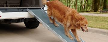 dog on the dog ramp