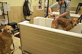giving the boys a bath at the self service dog grooming stations at petsaver super